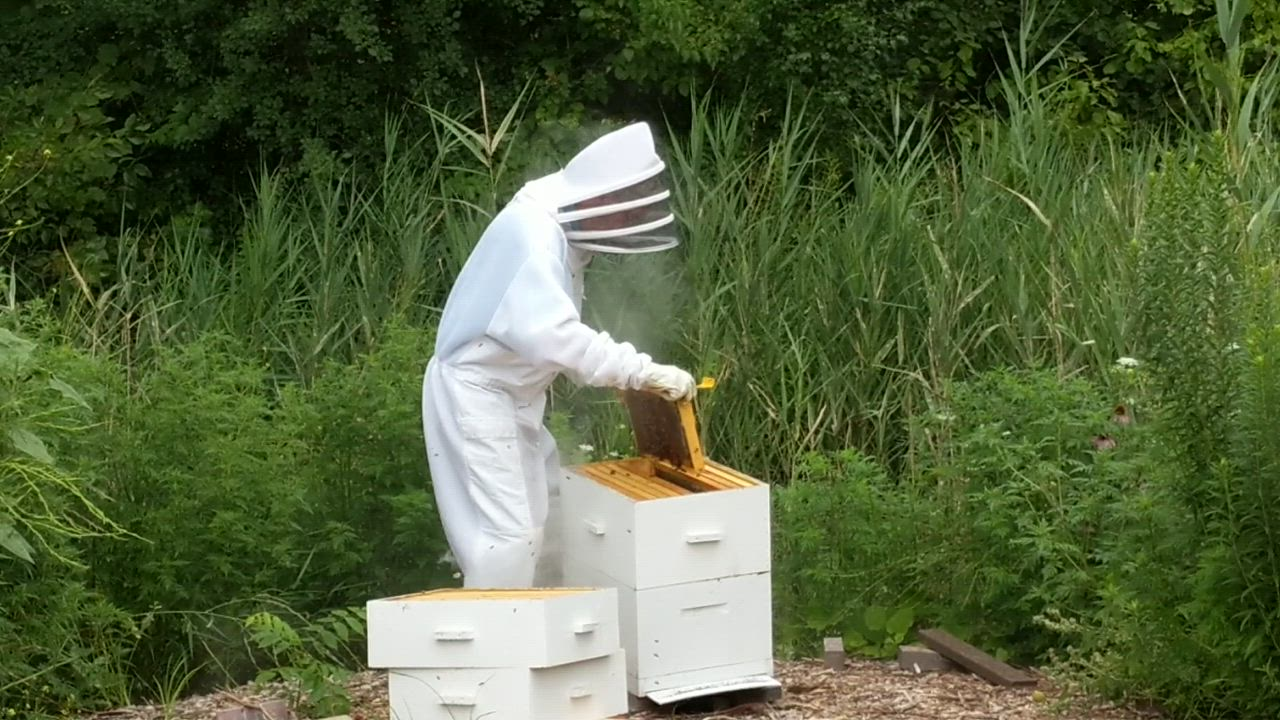 Village Links golf course superintendent Chris Pekarek inspects the honey bee hives at the golf course. The golf course harvests its own honey to sell and also to use in its restaurant, Reserve 22.